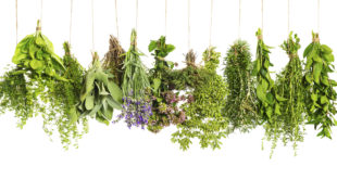 o-COOKING-WITH-HERBS-facebook