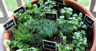 one-pot-garden