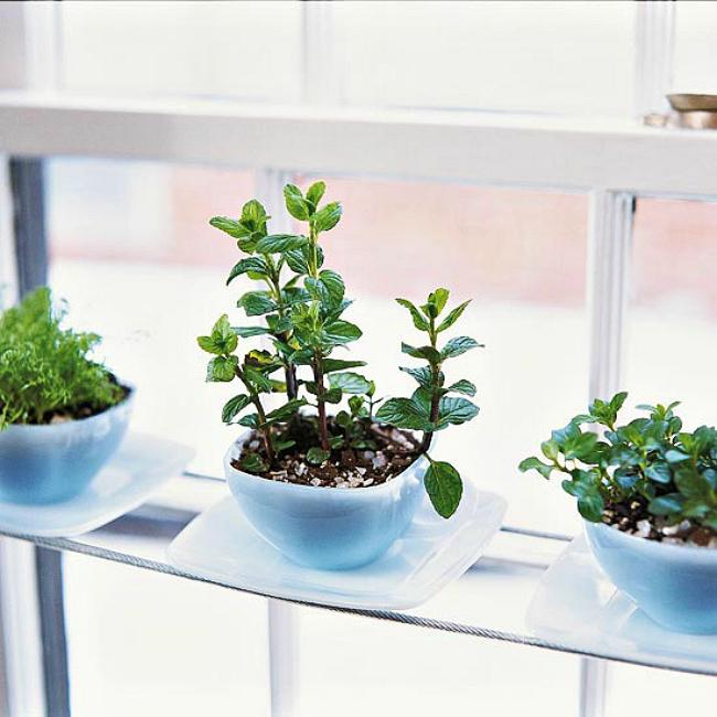 tea-cup-herbs