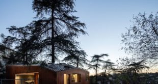 House-with-a-tree-growing-through-it